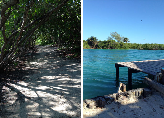 Mangrove tree tunnels and The Split